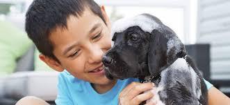 En esta navidad regala y enséñale a tus hijos el amor y cuidado por sus mascotas con productos 100 %naturales