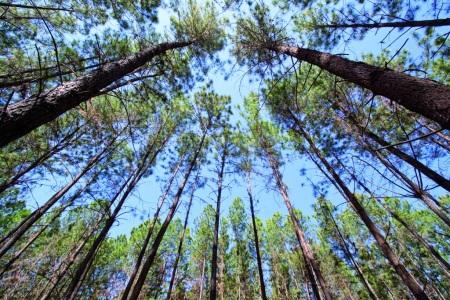 reforestación faber-castell